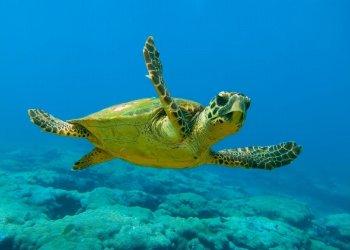 В Пафосе появится музей черепах